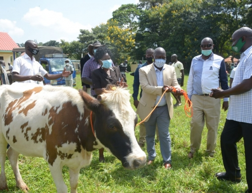 Siaya Farmers Benefits from Poultry and Dairy Cows for Sustainable Food Production