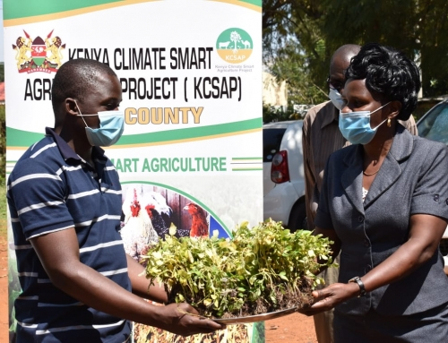 Farmers Receive Over 10,000 Tomato Seedlings